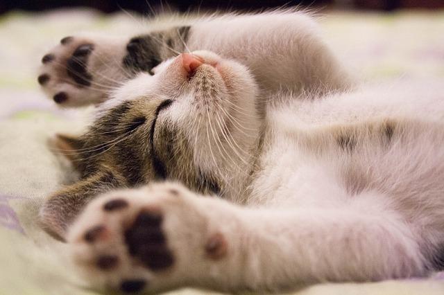 kitten-2288404_640.jpg