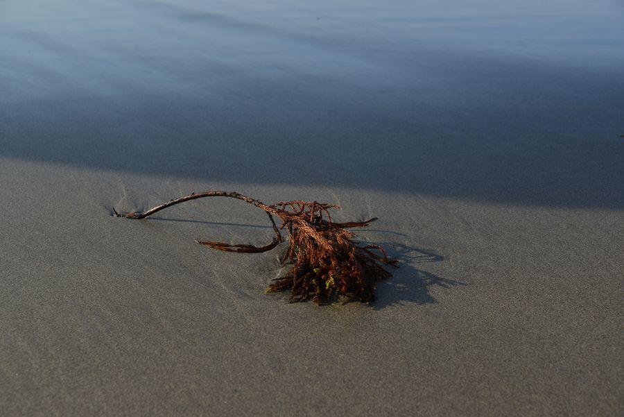 砂浜にて-2