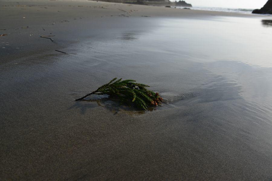 砂浜にて-3