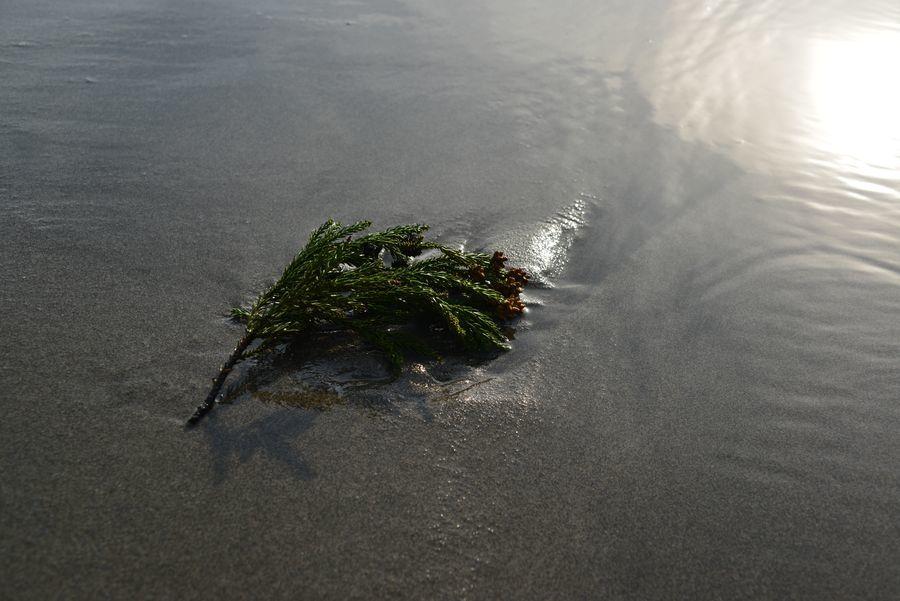 砂浜にて-4