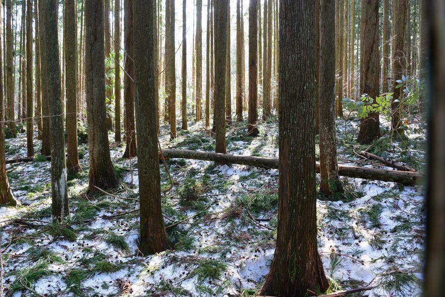 雪の残る林-2