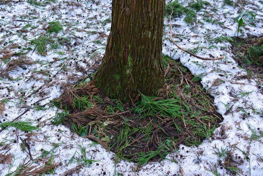 雪の残る林-3