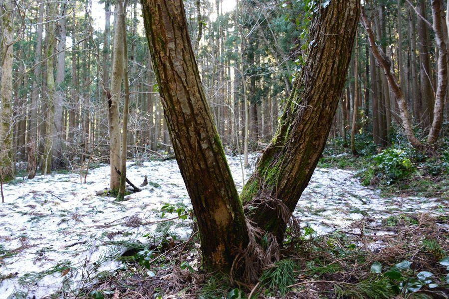 雪の残る林-4