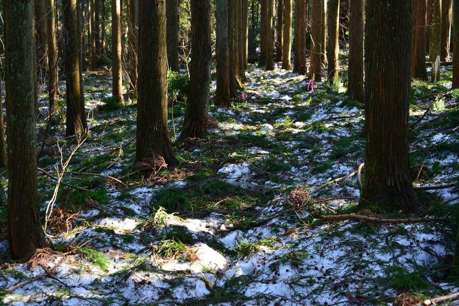 雪の残る林-5