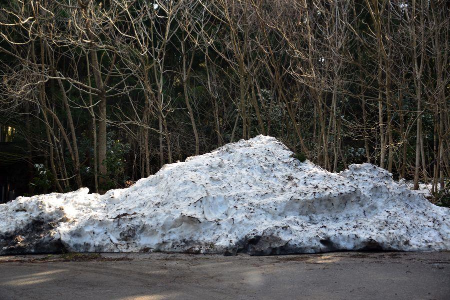 雪の残る林-6