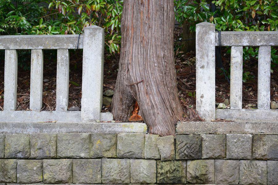 神社の樹-3