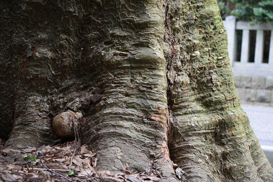 神社の樹-5
