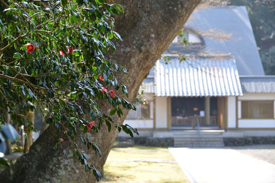 妙光寺の花-1