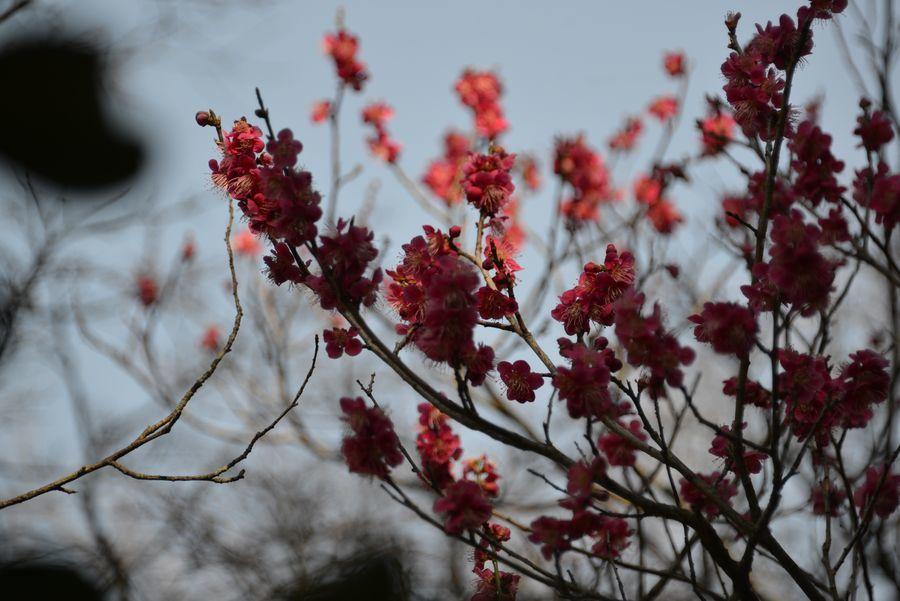 妙光寺の花-2