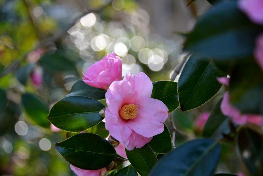 妙光寺の花-4