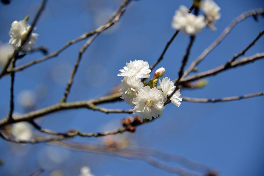 妙光寺の花-5