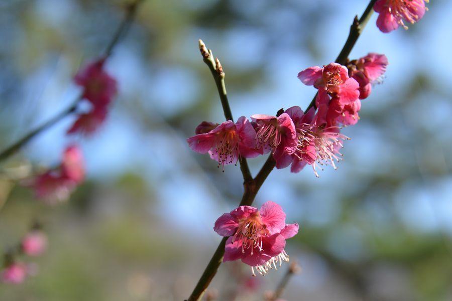 妙光寺の花-8