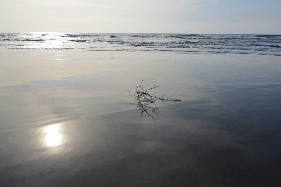浜辺に-2
