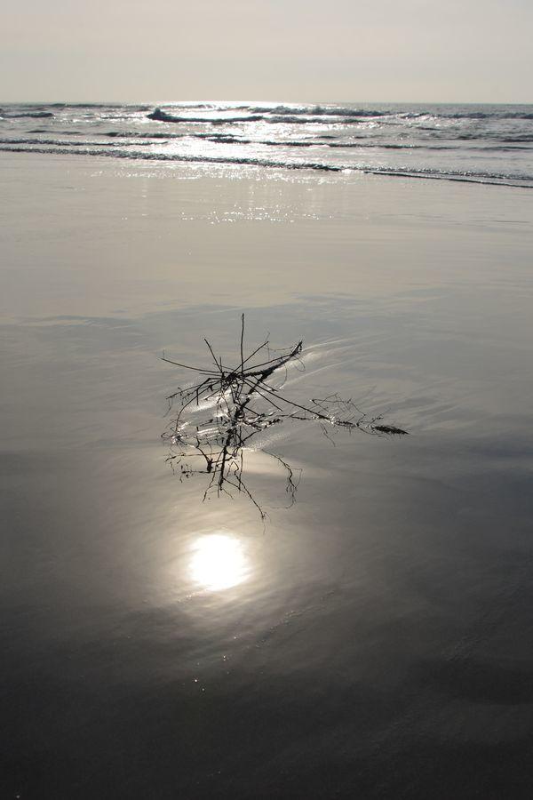 浜辺に-3