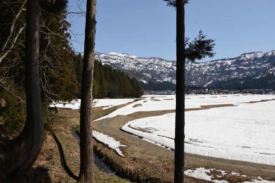 八海山麓の雪解け-3