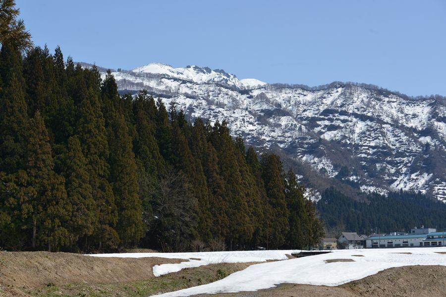 八海山麓の雪解け-2