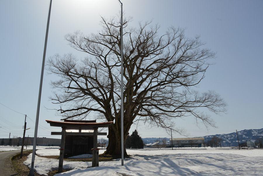 お社と樹-3