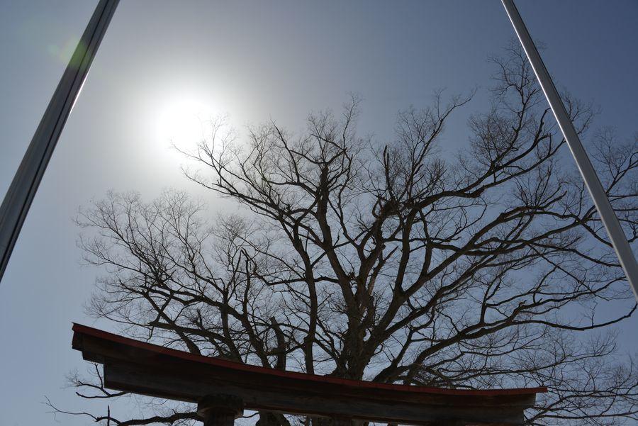 お社と樹-5