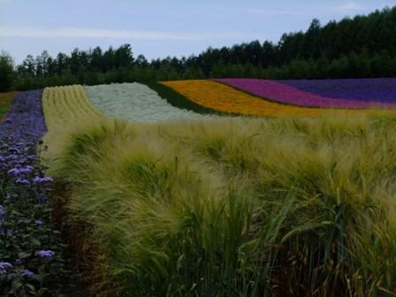 2012,7彩りの畑