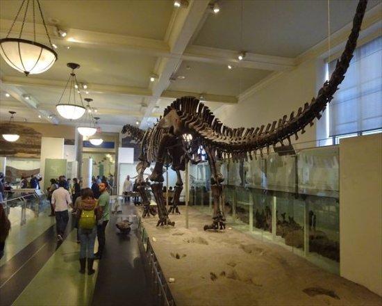 恐竜 骨格