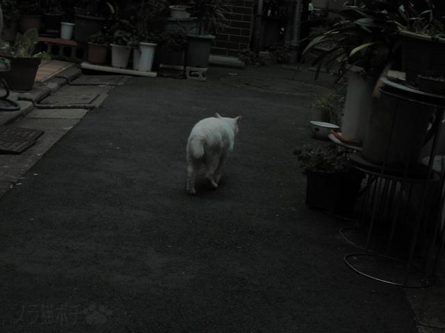 猫 去りゆく