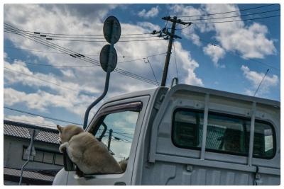 戌年だから dog is boss