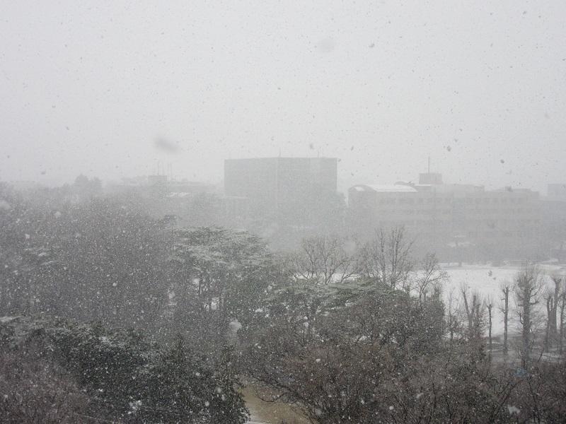 3月の雪2