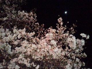 180325入間丸広駅前夜桜と月