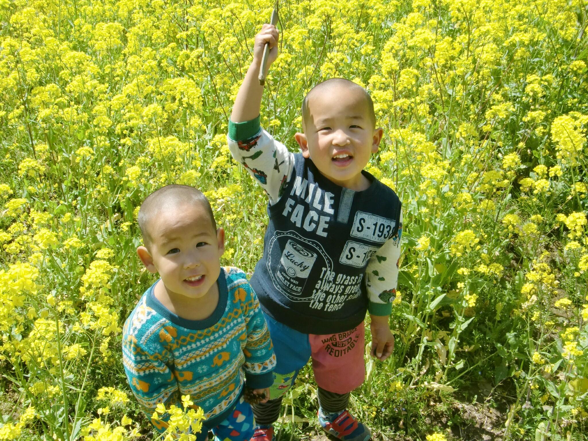 小湊鉄道 菜の花