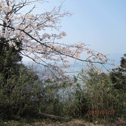 王子山公園の桜
