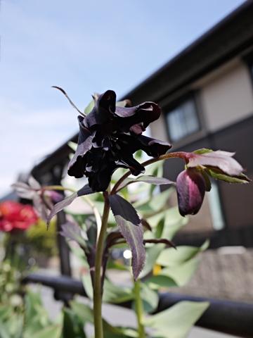 gardening392