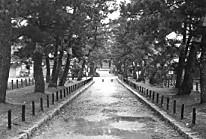 法隆寺松並木