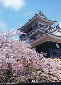 濱松城と櫻
