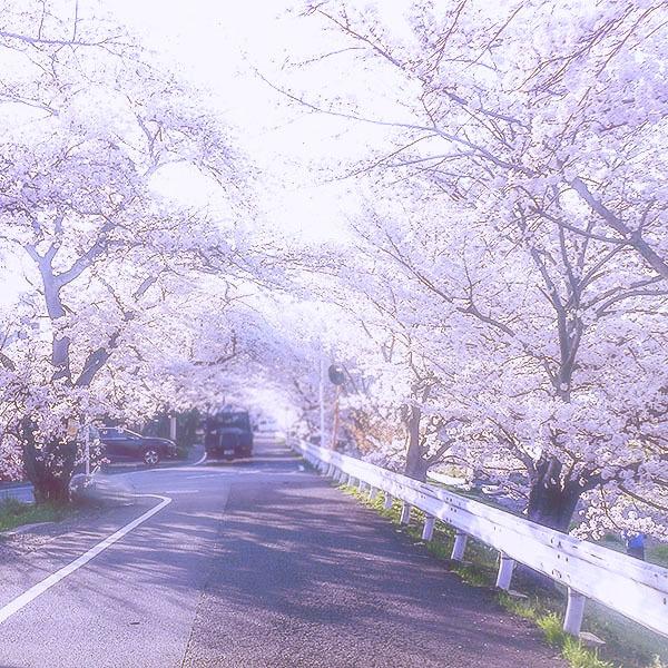 ピンクの道