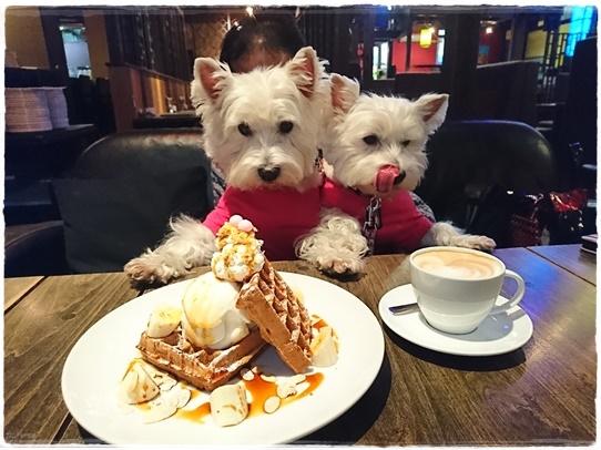 cafe10_20180126194743761.jpg