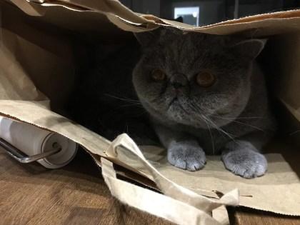 紙袋発見!