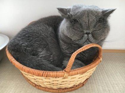 かご猫平蔵君