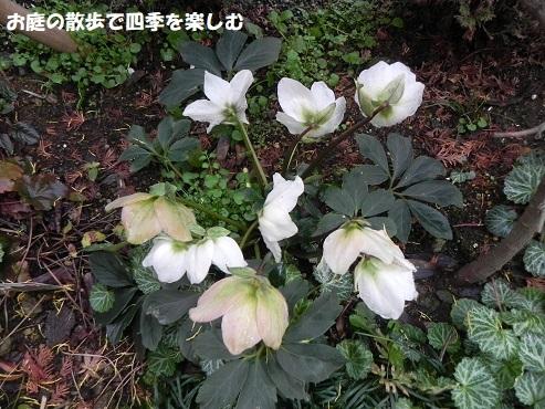 niwa320.jpg