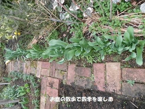 niwa321.jpg