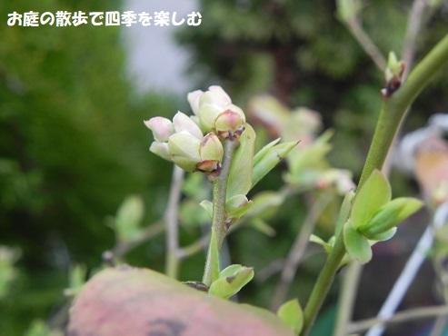 niwa325.jpg