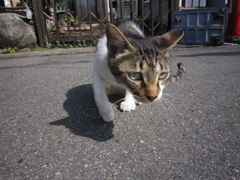 cat-023.jpg