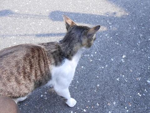 cat-024.jpg