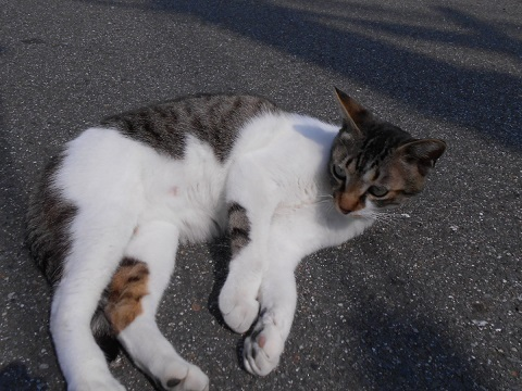 cat-028.jpg
