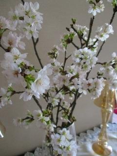 おうち桜3