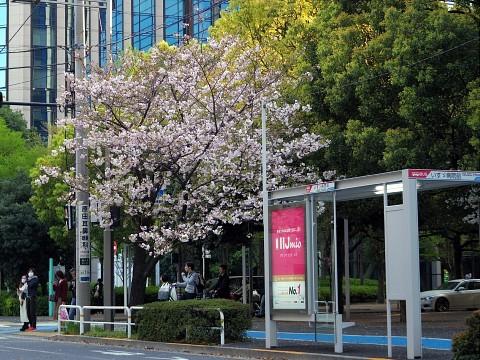 irifunesakura19.jpg