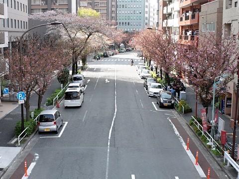 irifunesakura21.jpg
