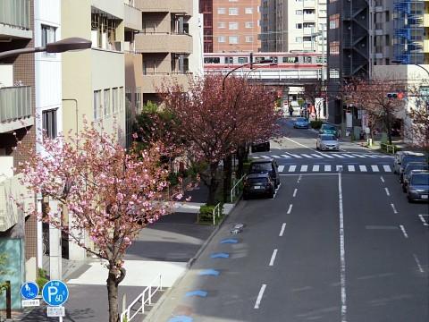 irifunesakura23.jpg