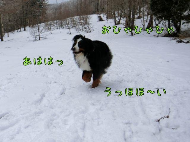CIMG4013_201803261731303a1.jpg
