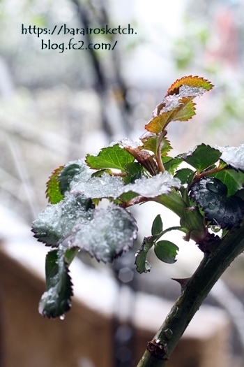 春の雪201803-12