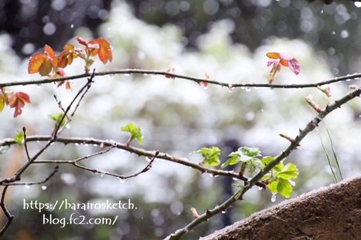 春の雪201803-14
